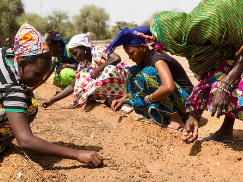 African women plant seedlings as part of the Great Green Wall.