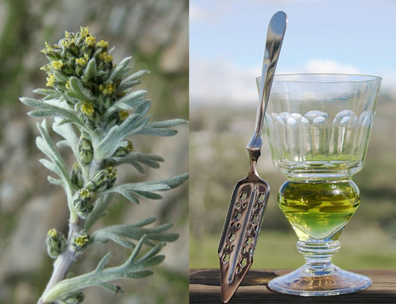 Wormwood (left) and absinthe (right)