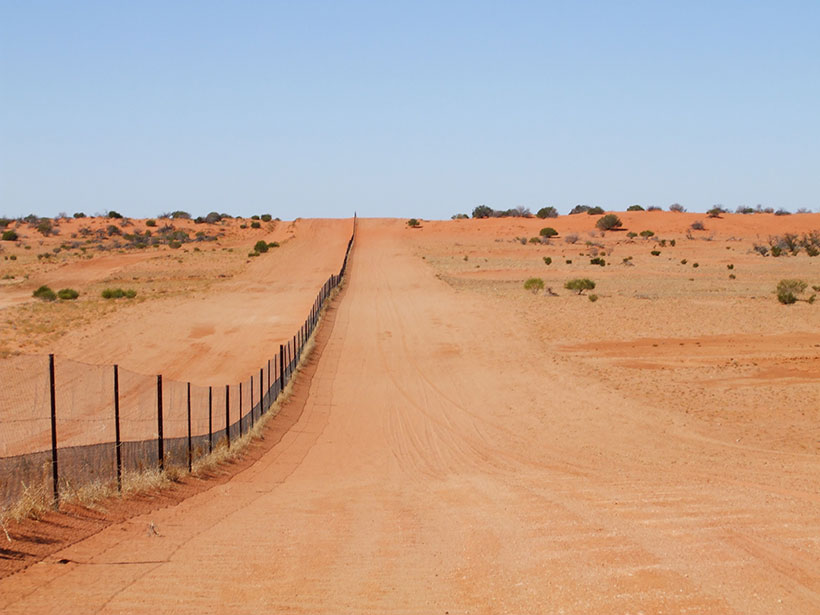A photo of the Dingo Fence in Australia's Strzelecki Desert shows greater shrub density on the northern side of the fence (left side of the image).