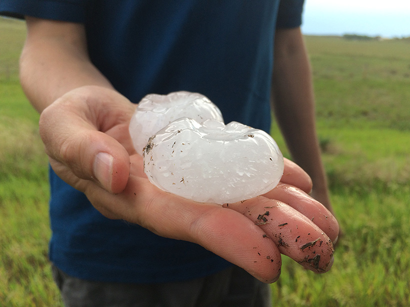 A man holds two very large hailstones in his hand.