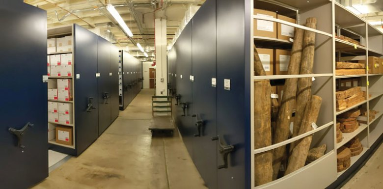 View of a large storage room with open ceilings and dark mobile aisle shelving; two aisles are open showing boxes, tree trunks, cores, and cookies.