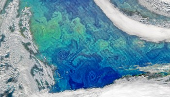Satellite image of a phytoplankton bloom on the ocean's surface.