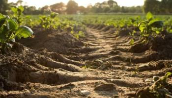 Vista desde el suelo de una marca de tractor en un suelo de un campo de cultivos