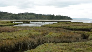 A view from the South Tidal Marsh Trail pier of the Mary E. Theler Wetlands Nature Preserve in Belfair, Wash.
