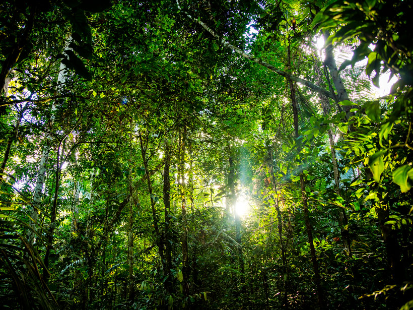 Patch of forest close to the Tambopata River, Peru