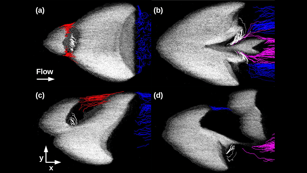Visualization of the trajectories of some sand grains during two different kinds of barchan-barchan interactions.