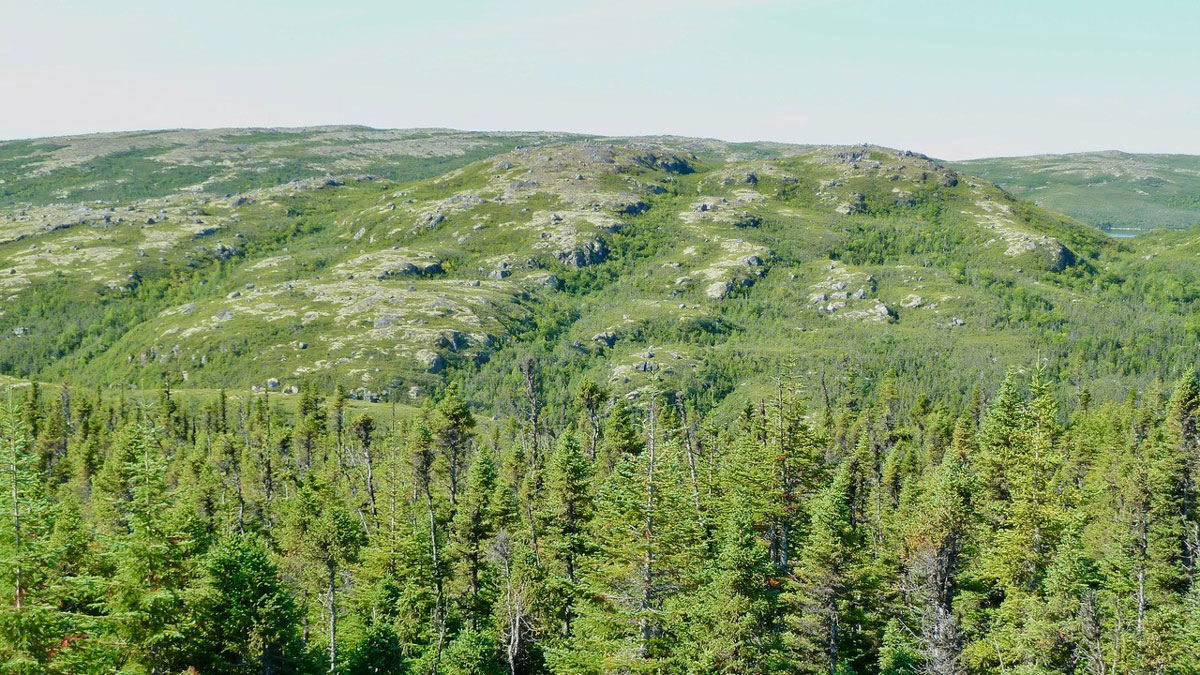 Dense green pine trees form the foreground. Gray rocks forming low-relief hills are in the middle distance, dotted with green trees, with a hazy blue sky in the background.