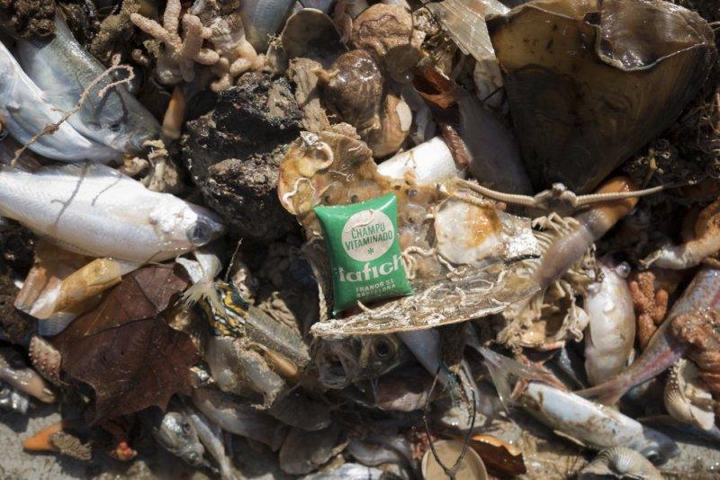 Las redes traen a la superficie productos industriales de hace décadas: un jurel se queda atrapado dentro de un vaso de plástico de yogur de piña de Danone de 1977; aparece una pequeña bolsa de champú de una antigua marca, Lafich, con el precio todavía visible: 6 pesetas.