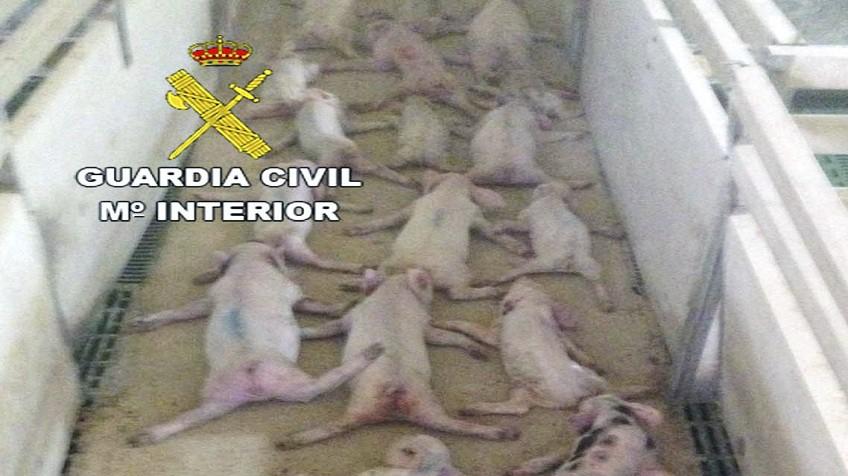 Resultado de imagen de almeria torturan 73 cerdos