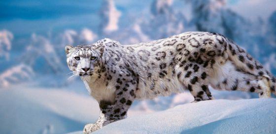 Animales Felino Leopardos Fondo De Pantalla Fondos De: El Blog De AKtivistas Kulturales