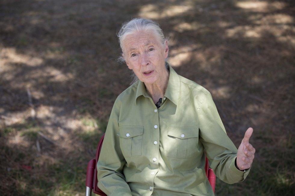 Jane Goodall, ayer, en el Museo Nacional de Ciencia y Tecnología. / MUNCYT