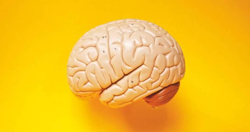 Resultado de imagen para Sentirte joven hará que se retrase el envejecimiento de tu cerebro