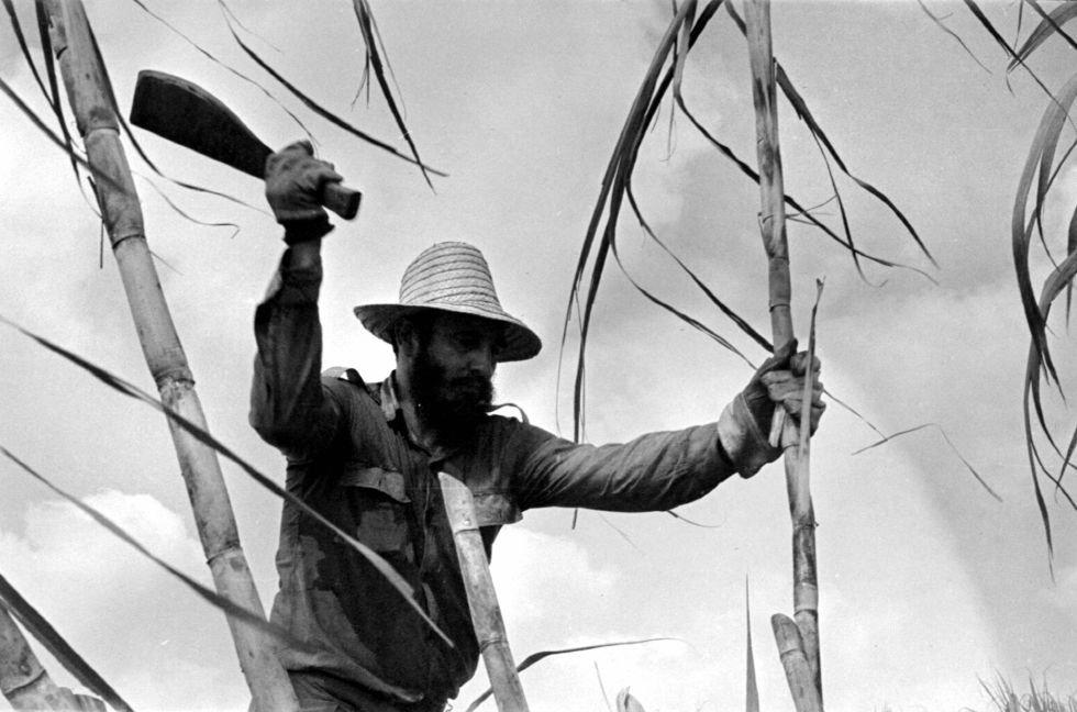 La zafra es el nombre que recibe la cosecha de la caña de azúcar. En 1970, la Cuba de Fidel Castro se propuso mejorar la economía del país alcanzando una producción de 10 millones de toneladas de azúcar.