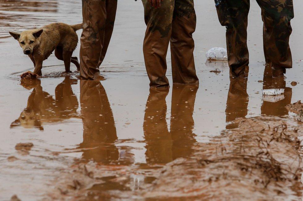 Un perro camina detrás de unos soldados de Laos en las áreas inundadas en Sanamxai.