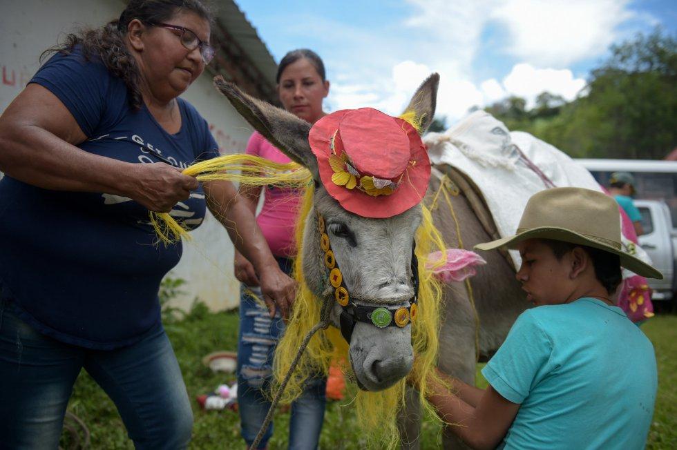 Un burro acicalado para el concurso regional de burros de Moniquira (Colombia).