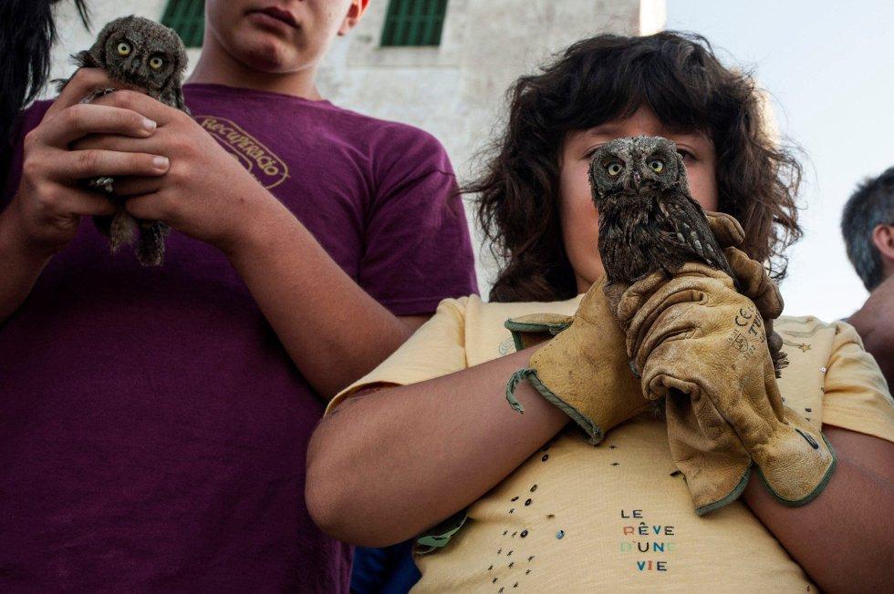 Voluntarios del colectivo ecologista Grupo Ornitológico Balear momentos antes de liberar a 10 búhos huérfanos desde la montaña del Toro en Menorca recuperados en el Centro de Recuperación de Fauna Silvestre ubicado en Ciutadella.