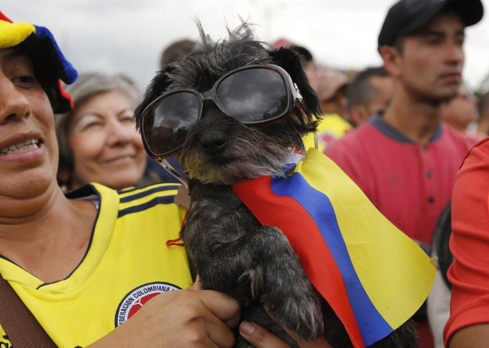 Un aficionado colombiano junto a su perro, vestido con los colores de su selección, durante la retransmisión del partido del Mundial de Rusia entre Colombia e Inglaterra en Bogotá (Colombia).