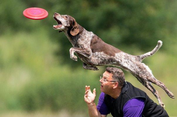 Un perro y su dueño compiten en un campeonato de Dogfrisbee en Erftstadt (Alemania), en junio de 2018.