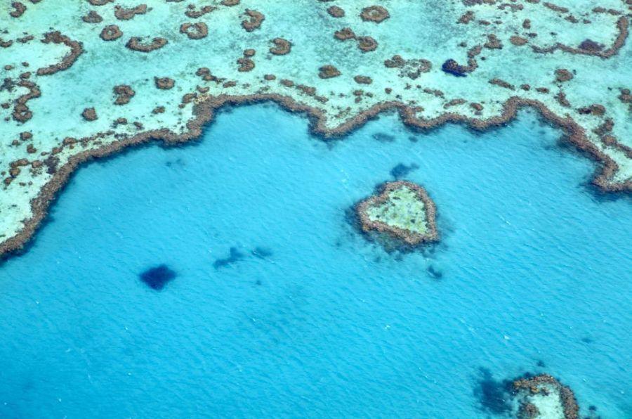 Con una extensión de más de tres mil kilómetros frente a la costa este de Australia, la Gran Barrera es el mayor conjunto de arrecifes coralinos del mundo, un ecosistema único donde viven 400 tipos de coral y 1.500 especies de peces. Un paraíso para los buceadores.