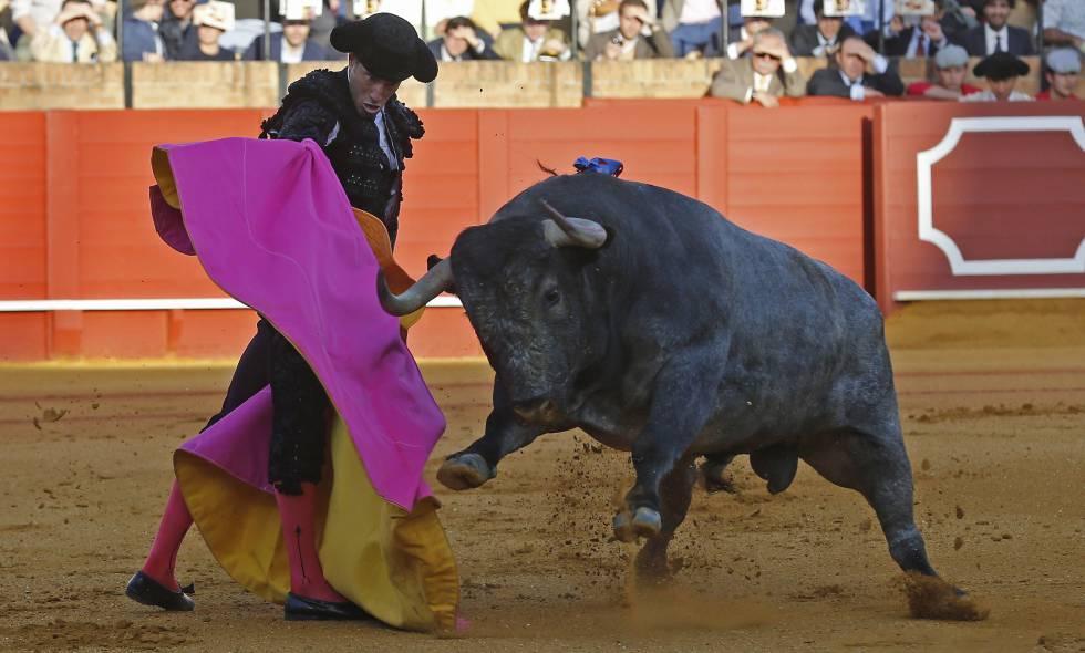 Escribano, con su segundo toro, que fue indultado, en la corrida de hoy en la Maestranza.