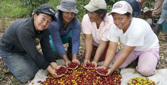 Cuatro mujeres de la asociación AMUCC muestran la distinta maduración del grano del café en la región colombiana del Cauca.