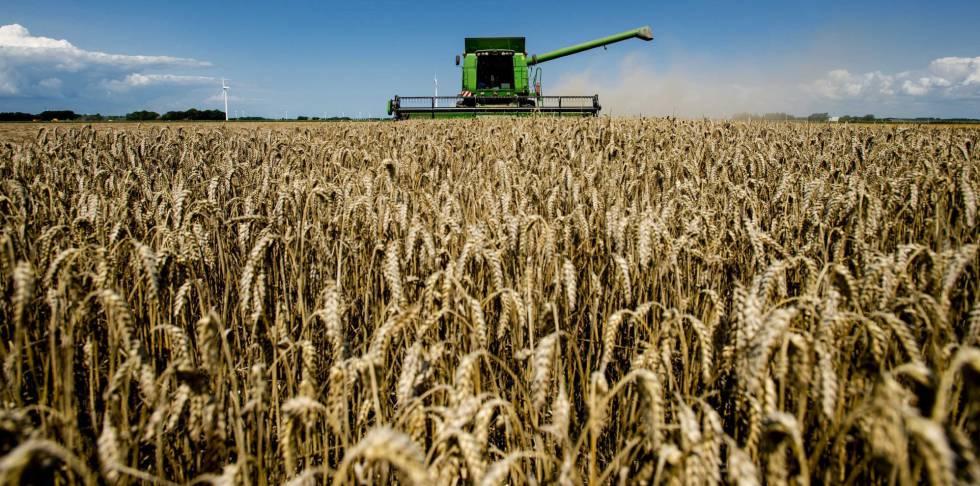 Una cosechadora surca los campos de trigo en Swiftebrant, Holanda