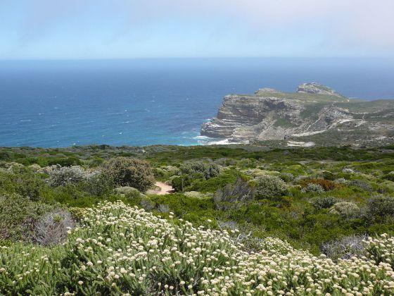 Fynbos costera, detrás el Cabo de Buena Esperanza