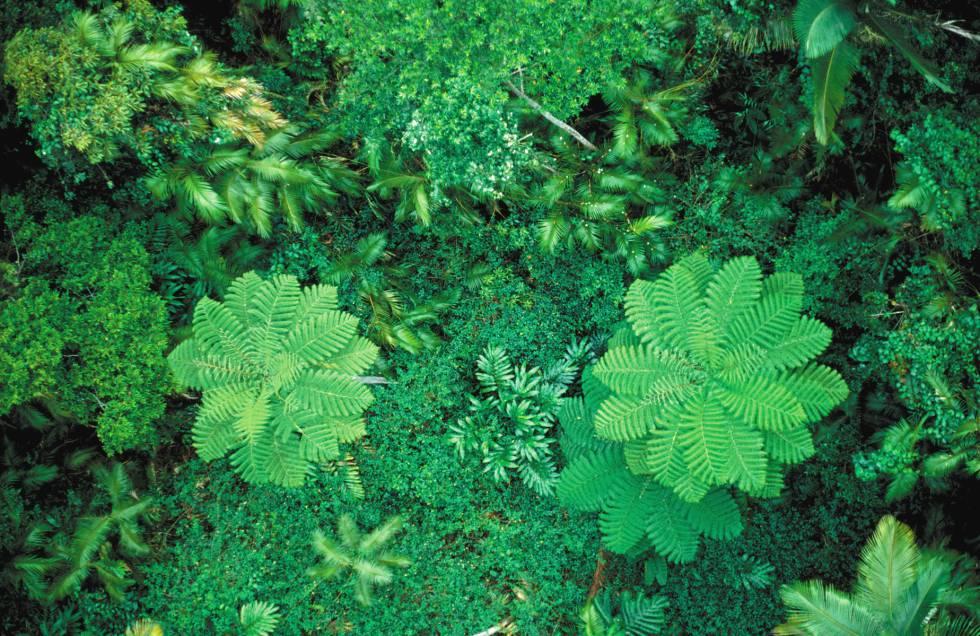 La cubierta vegetal global está creciendo a pesar de la deforestación. En la imagen, la selva de Cairns, en Australia.
