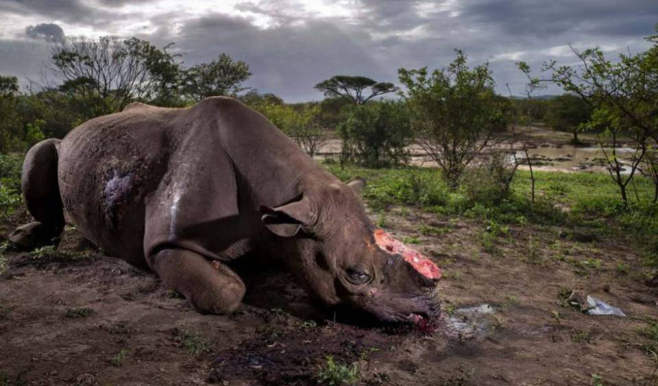 Las fotos ganadoras del Wildlife Photographer of the Year 2017