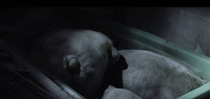 Esto opinan de 'Salvados' los activistas por los derechos de los animales
