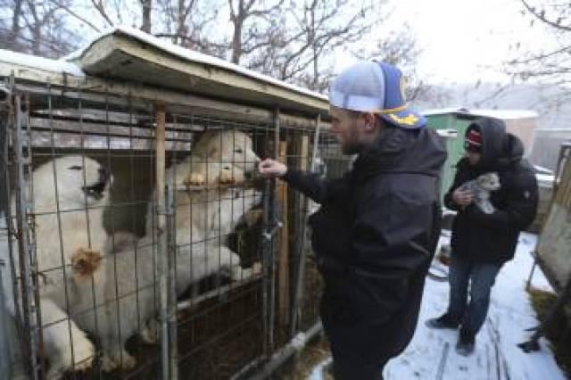 Gus Kenworthy junto a su novio Matthew Wilkas acarician a unos perros de una granja de carne en Corea del Sur.