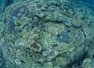 Una comunidad saludable de arrecifes de coral en la Gran Barrera.