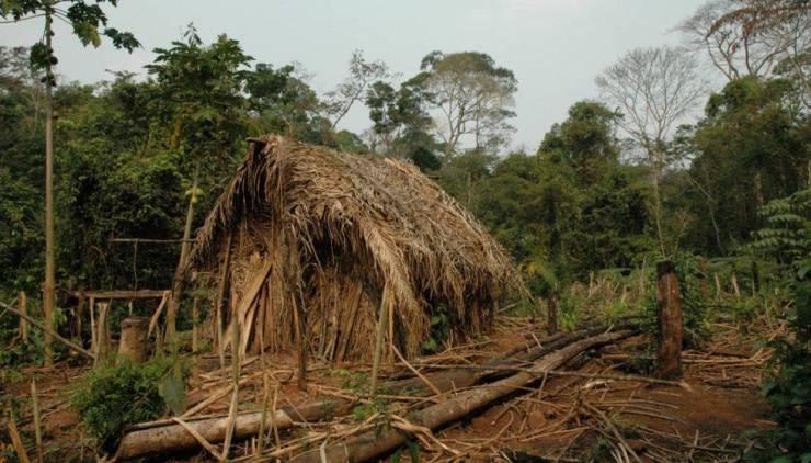 """Cabana do """"Índio do Buraco"""", na terra indígena Tanaru, em Rondônia."""