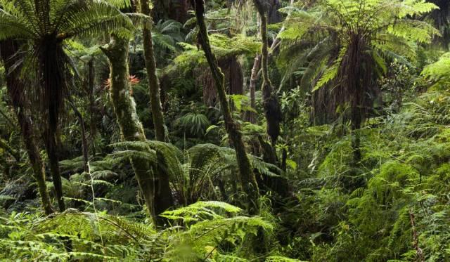 La mayor parte de Haití debió ser una selva como la que se conserva en la zona montañosa de Macaya.