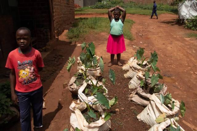 Los niños que viven cerca de la granja Kwagala han aprendido técnicas agrícolas y ahora cultivan sus propias frutas y hortalizas.