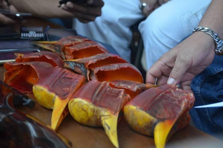 Entre 2010 y 2017 se han confiscado casi 2.900 picos de cálaos de yelmo y solo en Indonesia. Se desconoce los ejemplares que quedan.