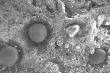 Imagem de microscópio dos micróbios esféricos achados em Dallol.