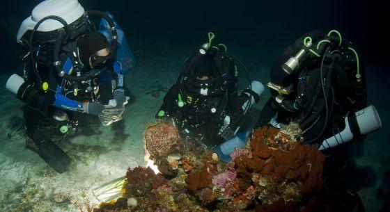 Buceadores de PharmaMar toman muestras de organismos marinos