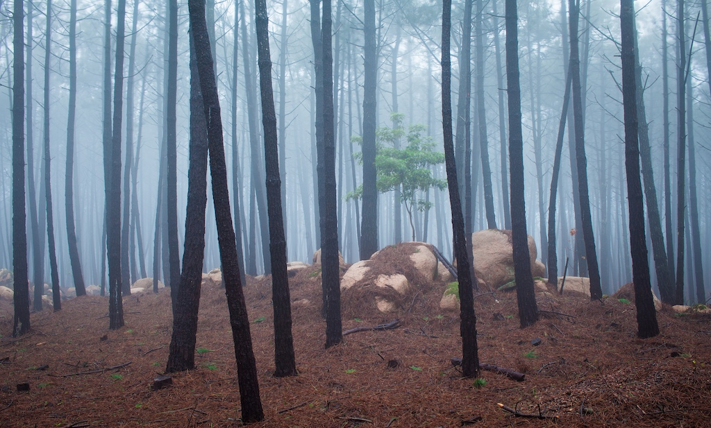 Sintra forest in fog