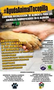 info antofagasta