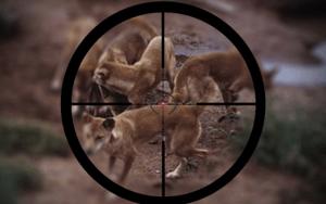 caza perros