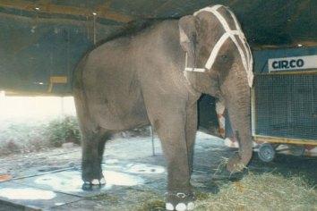 elefante-ramba