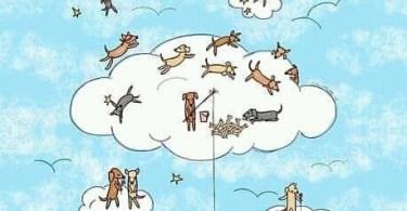 Ilustración compartida por narices frías fundación
