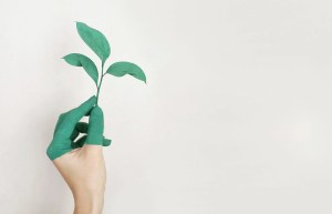 Image of hand holding a plant
