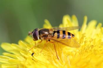 Чем питаются осы зимой и летом, едят ли они рыбу и мясо{q}