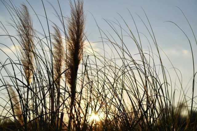 champ de blé.Logement