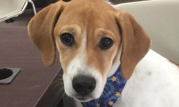 eParisExtra Dog of the Week