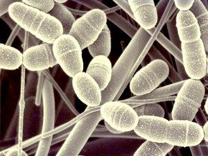 Туберкулез - новое или хорошо забытое старое?!
