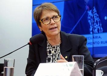 Reunião ordinária. Dep. Tereza Cristina (S.PART. - MS). Foto: Luis Macedo/Câmara dos Deputados