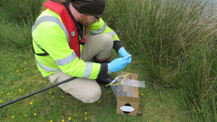 eDNA surveys for great crested newt can be used to determine whether GCN are present or absent in a pond.